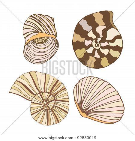 Vector gently seashells set
