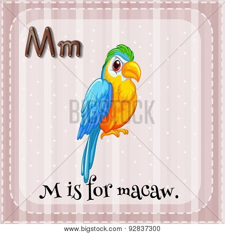 Flashcard of letter M that stands for macaw