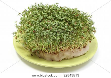 Fresh Green Watercress On Cotton Pad. White Background