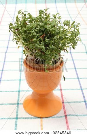 Fresh Green Watercress In Orange Cup