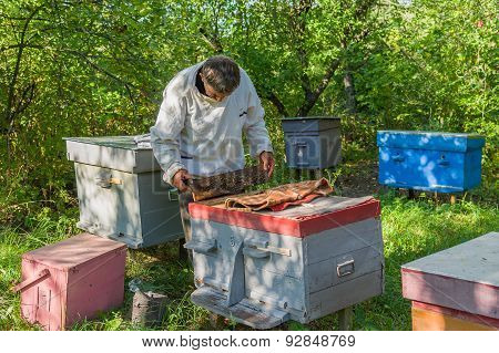 Ukrainian bee-keeper at work
