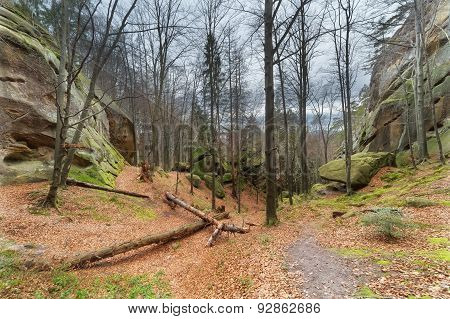 Autumn Beech Forest With Stone Boulders