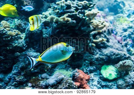 underwater image of colorful tropical fishes