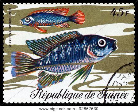 Vintage  Postage Stamp. Fish Hemichromic Fasciatus.
