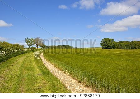 Bridleway And Barley Field