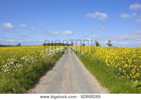 Road Through Mustard Fields