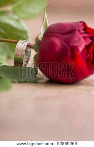 Romantic Wedding Band On A Single Red Rose