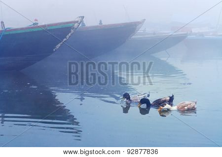 Ducks Near Boats On Sacred River Ganges At Cold Foggy Winter Morning