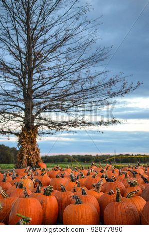 Spooky Halloween Tree with Pumpkins