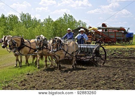 Horses pull grain drill in a field
