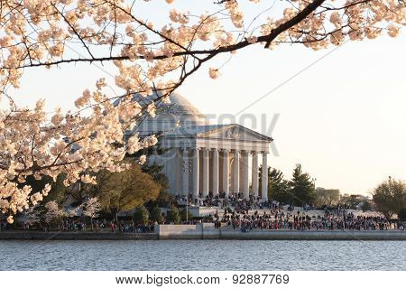 Cherry Blossom Festival - Washington, D.c.