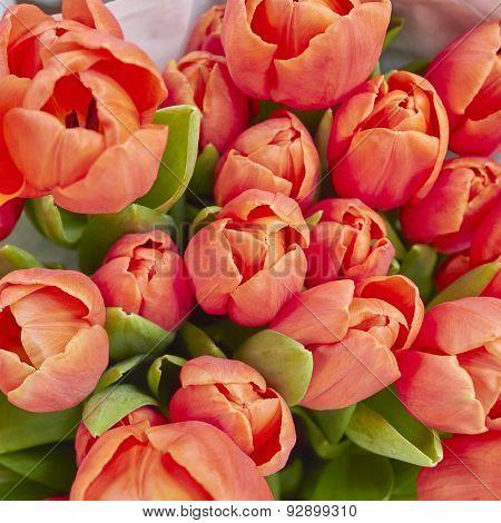 orange tulip flowers close up