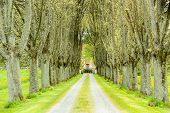 stock photo of tree lined street  - Avenue up to gates of house - JPG