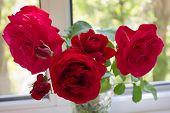 stock photo of rose bud  - Bardovaya Grew Red Buds Rosa Red roses Buket Valentina Debutante Map - JPG