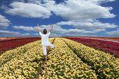 foto of buttercup  - Buttercups blooming garden - JPG