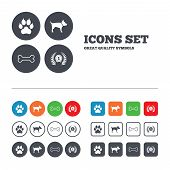 stock photo of clutch  - Pets icons - JPG
