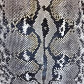 foto of pythons  - Snake skin python pattern textile texture - JPG