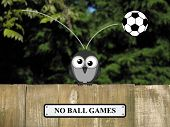 pic of bird fence  - Comical no ball game sign with concussed bird perched on a timber garden fence against a foliage background - JPG
