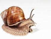 foto of mollusca  - Close - JPG