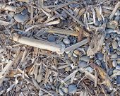 stock photo of algae  - dry algae and twigs polished by the sea - JPG