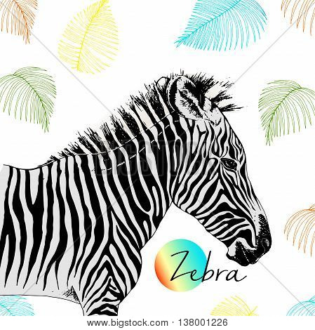 Vector portrait of zebra. Wild african animals collection. Engraved hand drawn style. Decorated with palm leaves.