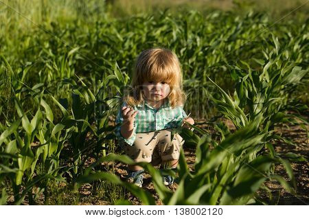 Little Boy In Green Cornfield