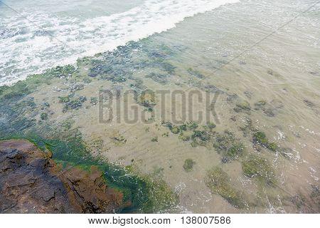 Shore Sea Algae