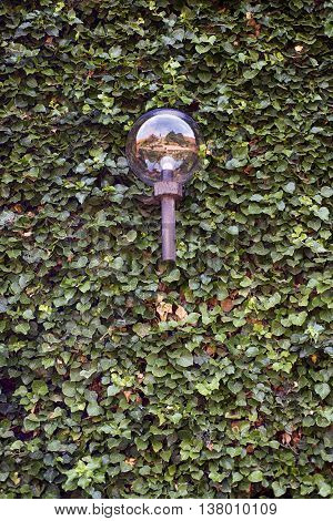 Ball lamp outdoor on the wall of green ivy leaves