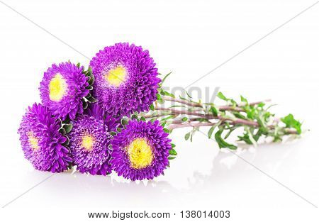 Purple Chrysanthemum Flower