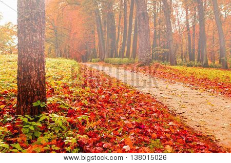 Foggy autumn landscape view of foggy autumn park with fallen autumn leaves soft filter applied -beautiful autumn landscape in cloudy weather with yellowed autumn trees along lonely autumn alley