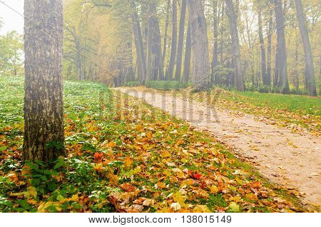 Foggy autumn landscape view of foggy autumn park with fallen autumn leaves soft focus processing -beautiful autumn landscape in cloudy weather with yellowed autumn trees along lonely autumn alley