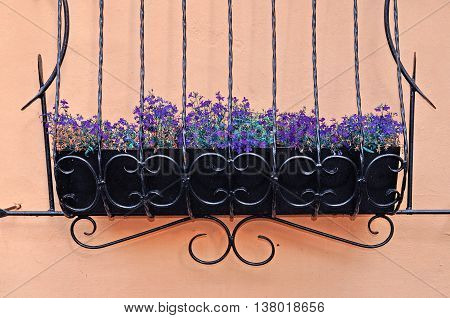 Violet little flowers of Lobelia - in Latin Lobelia Erinus - in the wrought metal pot attached to the wall