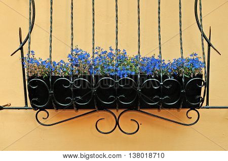 Bright blue flowers of Lobelia - in Latin Lobelia Erinus - in the wrought metal pot attached to the wall