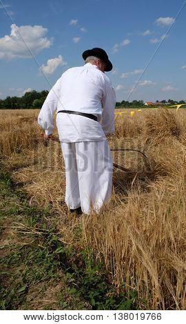 NEDELISCE, CROATIA - JULY 02, 2016: Farmer harvesting wheat with scythe in wheat fields in Nedelisce, Croatia on July 02, 2016