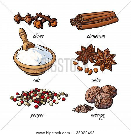 Set of spices - cinnamon, pepper, anise, nutmeg, salt, clove, isolated sketch style vector illustration on white background. Traditional cooking spices in Asian and Indian cuisine