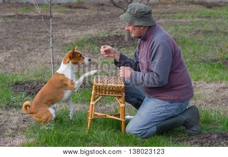 Mature man teaching smart basenji dog simple tricks in spring garden