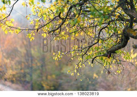 Tree Dry Leaves Nature Landscape