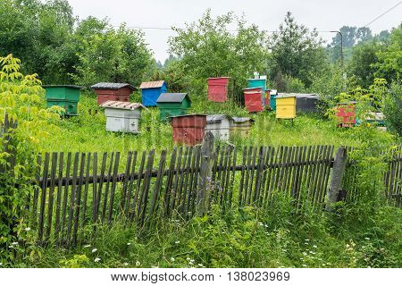 Apiary with colorful houses gardening production of honey bees.