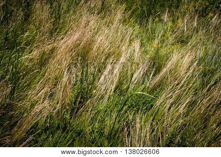 dry grass on meadow - abstract natural background