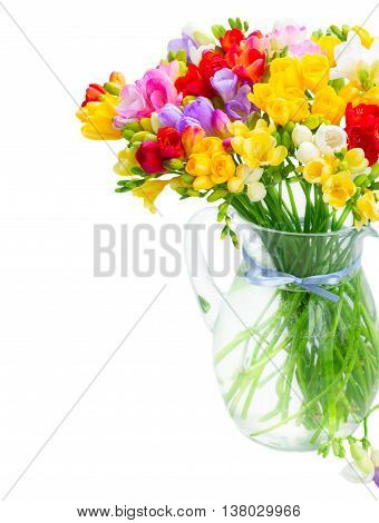 Bunch of Fresh multicolored freesia flowers in glass vase close up isolated on white background