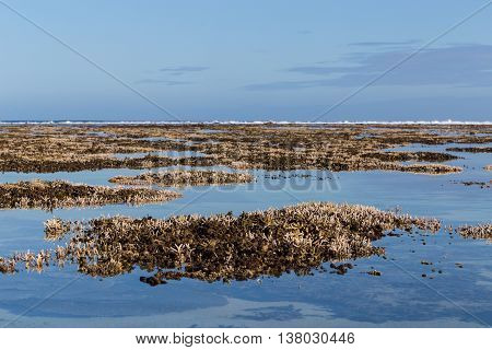 Corals Le Morne Mauritius At Low Tide