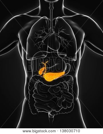 Human Gallbladder and Pancreas Anatomy Illustration. 3D render