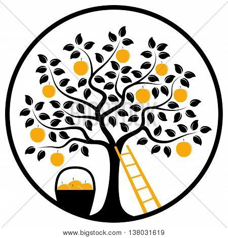 vector apple tree, ladder and basket of apples in round isolated on white background
