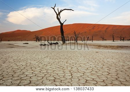 Dead trees and red dunes in Sossusvlei Namibia