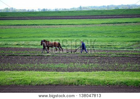 Antoniv - Chortkiv - Ukraine - May 4 2016. Farmers do spring agricultural work on their plot and for this purpose plow with a horse.