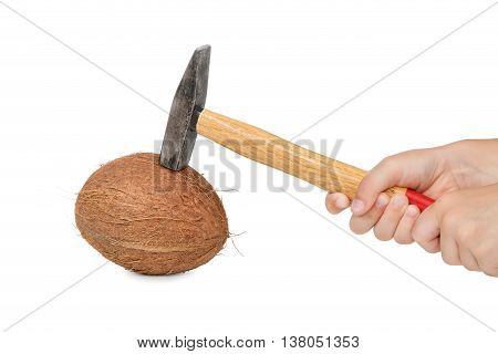 Two hands holding an old hammer and try to break a ripe coconut isolated on white background