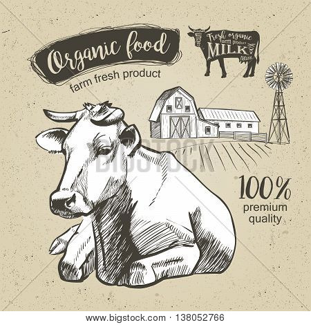 Cow lying on pasture farm. Vintage graphic