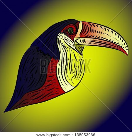 Abstract toucan. A bird with a large beak without a tail in color