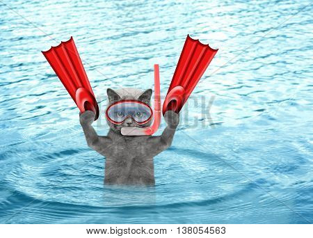 cat diving on summer holidays in the sea or ocean