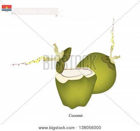 Kiribati Fruit Fresh Coconut. One of The Most Popular Fruits in Kiribati.
